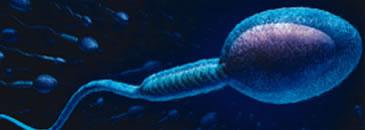 avaliação seminal (espermatozoides)