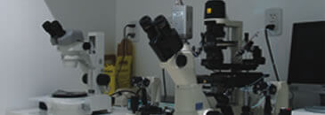 laboratório de imunologia da reprodução